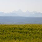 Grand Teton View by Cathy Stewart