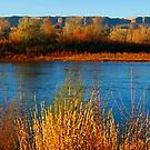 Colorado River View by Cathy Stewart