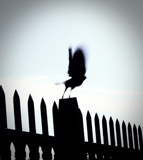Blurred Bird by meredith brown