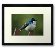 Tree Swallow On Fence Framed Print