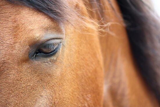 Horse 2420 by João Castro