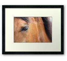 Horse 2420 Framed Print