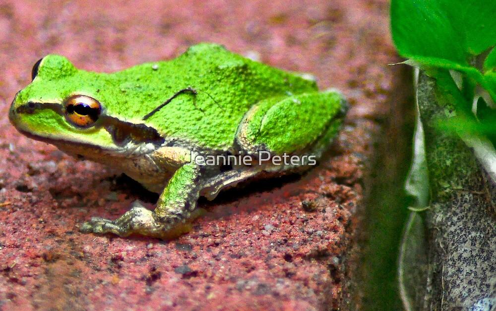 Kermit by Jeannie Peters