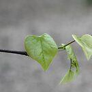 Spring Leaves by meredith brown
