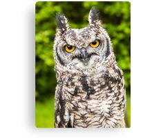 African Spotted Eagle Owl Canvas Print