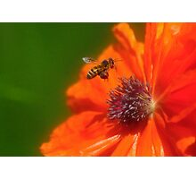 buzzing around Photographic Print