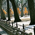 Central Park in Saffron by Kirstyshots