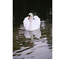 Glassy Glide Photographic Print