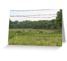 Barbed Wire and Beauty Greeting Card
