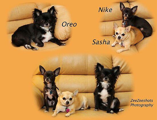 Oreo, Nike and Sasha by ZeeZeeshots