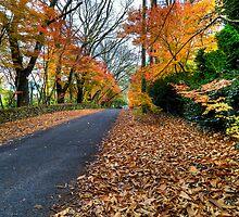 Autumn   Mt Mount Wilson   NSW   Blue Mountains   Australia   HDR by DavidIori