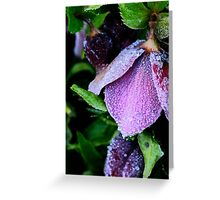 Chilled Purple Perfection Greeting Card