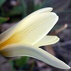 A Lily in the Side Garden by Elizabeth Bennefeld