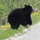Running free ---Black Bear by eoconnor