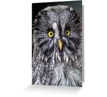 Post bath Great Grey Owl Greeting Card