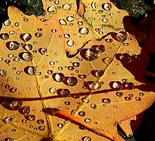 Droplets on Autumn Leaves by rwhitney22