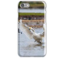 Wild Bewick's swan about to land iPhone Case/Skin