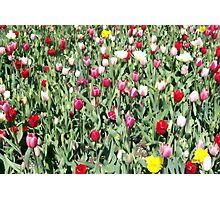 Flowers 0662 Photographic Print