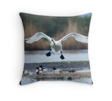Bewick's swan about to land on water with wings outspread Throw Pillow