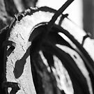 Rusty Horseshoes- Arizona by rwhitney22