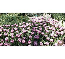 Flowers 0668 Photographic Print