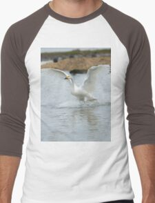 Bewick's swan about to land on water with wings outspread Men's Baseball ¾ T-Shirt