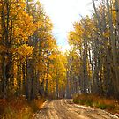 Autumn Road Through the Aspens by rwhitney22