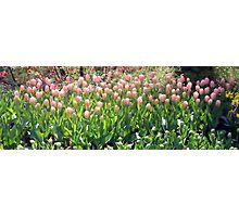 Flowers 0674 Photographic Print