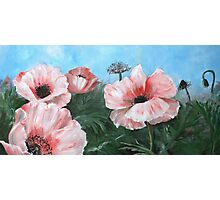 pink poppies in the field Photographic Print