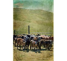 When the Cows Wanna Go Home Photographic Print