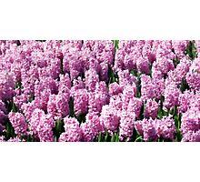 Flowers 0702 Photographic Print