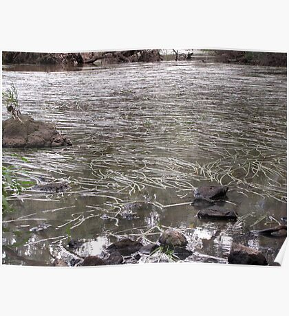 River of Grass-Jacksons Creek-two Poster