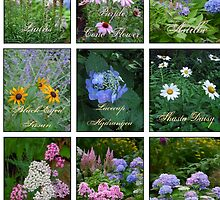 Photographer's Perennial Garden Collage by ginawaltersdorf