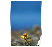 Hillside Flower Poster
