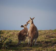 Kissing Kangas by KaPaphotography