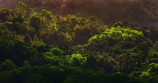 Shades of green by Hans Kawitzki