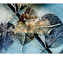 Frosty Leaves - Postcard by Michelle Bush