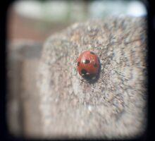 TTV Ladybird by Daniel James