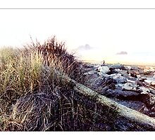 Dunes & Driftwood - Postcard by Michelle Bush
