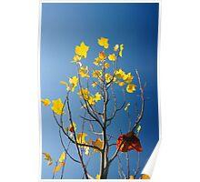 Autumn Tones Poster