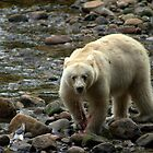 spirit bear - british columbia by KaPaphotography