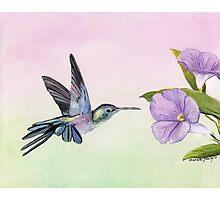 Hummingbird at Morning Glory Photographic Print