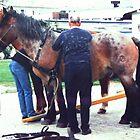 Tideland-Horses, by Heidi Mooney-Hill