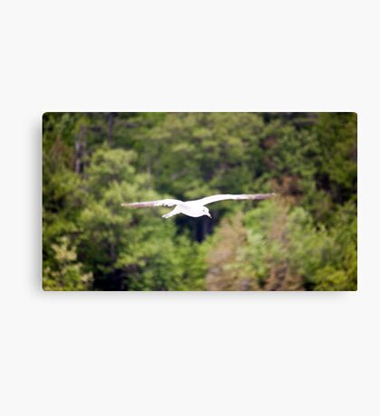 Flying seagull Canvas Print