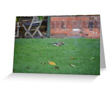 Jay On The Lawn Greeting Card