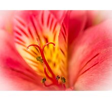 A Pink Flower Macro. Photographic Print