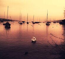 Swan Song by Daniel Hachmann