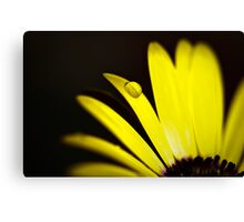 Summer is Coming 3 Canvas Print