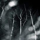 blushing heaven by Dorit Fuhg