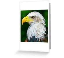 Bald Eagle Head Greeting Card